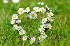 heart-daisies-meadow-40289068
