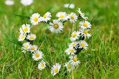 heart-daisies-meadow-40289068